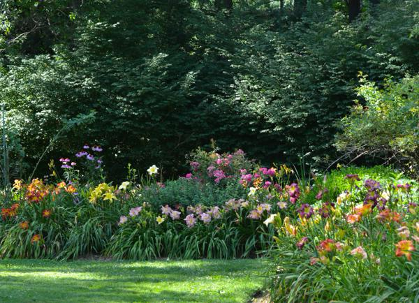 sayers daylily walk